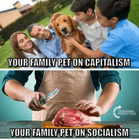 Get involved locally www..lp.org/states: YOUR FAMILYPET ON CAPITALISM  TURNING  POINT USA  YOUR FAMILY PET ON SOCIALISIM Get involved locally www..lp.org/states