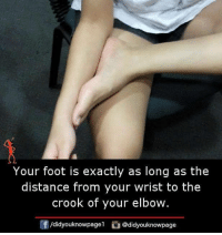 Memes, 🤖, and Foot: Your foot is exactly as long as the  distance from your wrist to the  crook of your elbow.  f/didyouknowpagel@didyouknowpage