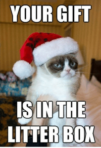 Let's just say the holiday season is not one of Grumpy cat's favorite time of the year. #funny cats # cats # grumpy cat # holiday memes # cat memes # grumpy cat memes # christmas memes #funny christmas: YOUR GIFT  ISINTHE  LITTER BOX Let's just say the holiday season is not one of Grumpy cat's favorite time of the year. #funny cats # cats # grumpy cat # holiday memes # cat memes # grumpy cat memes # christmas memes #funny christmas