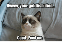 Goldfish, Grumpy Cat, and Good: your goldfish died.  Good. Feed me.  quickrmeme com Join Grumpy Cat. for more :)