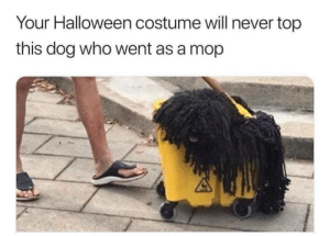Halloween, Best, and Never: Your Halloween costume will never top  this dog who went as a mop and winner of best pet costume.