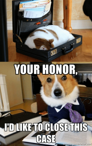 Cat and dog lawyer - Meme Guy: YOUR HONOR,  IİDIIKETOCLOSE THIS  CASE  generator.net Cat and dog lawyer - Meme Guy