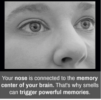 Memes, Brain, and Connected: Your nose is connected to the memory  center of your brain. That's why smells  can trigger powerful memories.