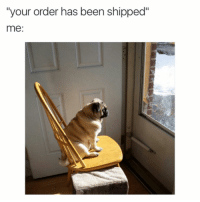 """Funny, Girl Memes, and Been: """"your order has been shippec""""  me: Now we wait"""