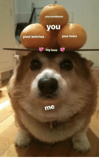 """Love, Nice, and Dog: your problems  you  your worries  your fears  my love  me <p>Nice dog via /r/wholesomememes <a href=""""https://ift.tt/2H95iqt"""">https://ift.tt/2H95iqt</a></p>"""