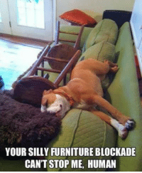 Dank, Furniture, and Humanity: YOUR SILLY FURNITURE BLOCKADE  CAN'T STOP ME, HUMAN