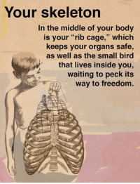 "Your body truly is astonishing.  What about your skeleton amazes you?: Your skeleton  In the middle of your body  is your ""rib cage,"" which  keeps your organs safe,  as well as the small bird  that lives inside you,  waiting to peck its  way to freedom. Your body truly is astonishing.  What about your skeleton amazes you?"