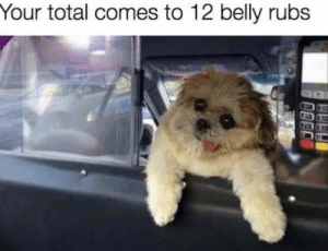 Cute, Taxi, and Total: Your total comes to 12 belly rubs Cute and cuddle taxi