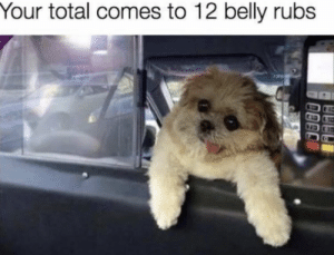 Memes, 🤖, and Total: Your total comes to 12 belly rubs https://t.co/CK5gwXr99V