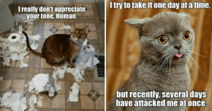 Your ultimate source for the newest, and cutest, cat memes!#catmemes #funnycats #funnymemes #animalmemes #lolcats: Your ultimate source for the newest, and cutest, cat memes!#catmemes #funnycats #funnymemes #animalmemes #lolcats
