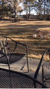 Tumblr, Blog, and Blue: yourdreamscantlast:  inaneenglish:  mechaphil:   blue-pixiedust:  egaylitarian:  wethekeegsta:  My dog and my bunny were playing in the back yard and I thought other people might enjoy watching as much as me  Please watch this video   This is one of the most magical things I have ever seen   That bun thinks it's a doggo   My favorite thing about bunz is that they express joy by leaping around. That's a happy bun.   @whateverthepoodle