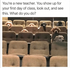 look out: You're a new teacher. You show up for  your first day of class, look out, and see  this. What do you do?