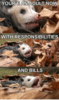 Bills, Adult, and Now: YOURE AN ADULT NOW  WITH RESPONSIBILITIES  AND BILLS