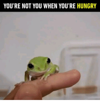 9gag, Hungry, and Memes: YOU'RE NOT YOU WHEN YOU'RE HUNGRY Tag a hungry monster 🐸 Follow @9gag - - 📷hoshi_363   Twitter - - 9gag frog