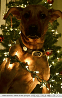 """<p>Trying to take Christmas photos when all of a sudden Dobbie! <a href=""""http://ift.tt/12tkYfy"""">http://ift.tt/12tkYfy</a></p>: You're probably better off not going to  MUGGLENET MEMES.COM <p>Trying to take Christmas photos when all of a sudden Dobbie! <a href=""""http://ift.tt/12tkYfy"""">http://ift.tt/12tkYfy</a></p>"""