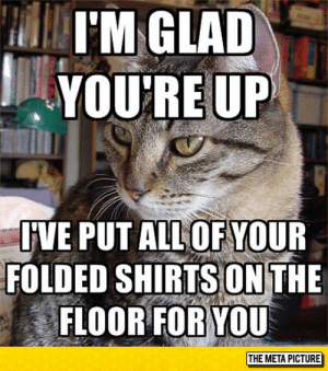srsfunny:  Helpful Feline Companion: YOU'RE UP  VE PUT ALL OF YOUR  FOLDED SHIRTS ONTHE  FLOOR FOR YOU  THE META PICTURE srsfunny:  Helpful Feline Companion