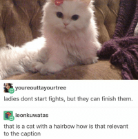 Memes, Good, and The General: youreouttayourtree  ladies dont start fights, but they can finish them  leonkuwatas  that is a cat with a hairbow how is that relevant  to the caption U ever have a good day and then the general discontent and sadness hits u