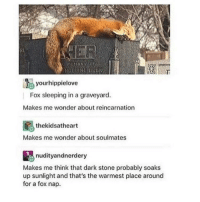 Memes, Reincarnation, and 🤖: yourhippielove  Fox sleeping in a graveyard.  Makes me wonder about reincarnation  the kidsatheart  Makes me wonder about soulmates  nudity andnerdery  Makes me think that dark stone probably soaks  up sunlight and that's the warmest place around  for a fox nap. makes me think about sleep (pls help me stay awake I'm so tired) - Max textpost textposts