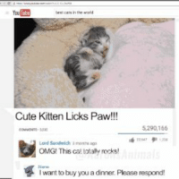 cute kittens: YouTub!  Cute Kitten Licks Paw!!!  5,290,166  Lord Sandwich a month ago  OMG! This cat totaly rocks!  want to buy you a dinner. Please respond!