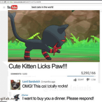 me irl: YouTube  best cats inthe world  Cute Kitten Licks Paw!!!  5,290,166  COMMENTS 3202  Lord Sandwich 3 months ago  OMG! This cat totally rocks!  gifak.n  want to buy you a dinner. Please respond me irl