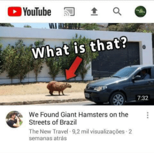 Streets, youtube.com, and Brazil: YouTube  What is that?  7:32  We Found Giant Hamsters on the  Streets of Brazil  The New Travel 9,2 mil visualizações 2  semanas atrás Brazilian Horror Story: Hamsters Gigantes https://t.co/xI1nuzBbTv