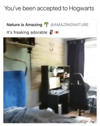 Nature, Girl Memes, and Amazing: You've been accepted to Hogwarts  Nature is Amazing T @AMAZINGNATURE  It's freaking adorable 😂😂😂😂😂