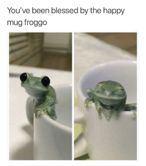 Blessed, Dank, and Memes: You've been blessed by the happy  mug froggo Have a great day by GallowBoob MORE MEMES
