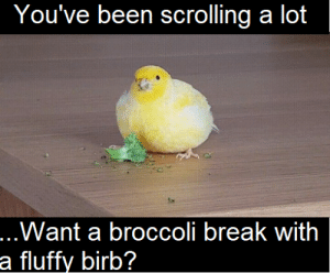 Hell keep you company: You've been scrolling a lot  ...Want a broccoli break with  a fluffy birb? Hell keep you company