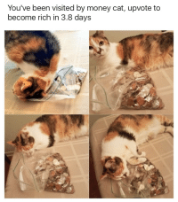 The money cats back in his new form, act fast: You've been visited by money cat, upvote to  become rich in 3.8 days The money cats back in his new form, act fast