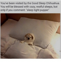 "Blessed, Chihuahua, and Funny: You've been visited by the Good Sleep Chihuahua.  You will be blessed with cozy, restful sleeps, but  only if you comment: ""sleep tight pupper Sleep tight pupper"