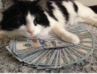 You've been visited by the Money Cat. She'll manage your finance and prevent unnecessary spending for the next 24 hours. Spread her wisdom to your friends. Follow @9gag: You've been visited by the Money Cat. She'll manage your finance and prevent unnecessary spending for the next 24 hours. Spread her wisdom to your friends. Follow @9gag