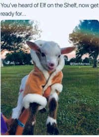 You've heard of Elf on the Shelf, now get  ready for.  @BestMemes Goat in a coat!!!!!