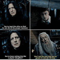 Check out @thelostprophecy, he's really close to 90k!! - Snape or Dumbledore? - harrypotter hp jkrowling hogwarts: You've kept him alive so that  he can die at the proper moment.  THEWIZARDS  him like  You ve been raising hirn like  You've been  Don't tell me now that you've  grown to care for the boy.  a pig for slaughter! Check out @thelostprophecy, he's really close to 90k!! - Snape or Dumbledore? - harrypotter hp jkrowling hogwarts