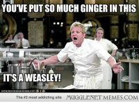 """Memes, Too Much, and Http: YOU'VE PUT SO MUCH GINGER IN THIS  TSAWEASLEY!  ICANHAS CHEEZBURGER.COM """"  류ら  The #2 most addicting site  MUGGLENET MEMES.COM <p>Too much Ginger! <a href=""""http://ift.tt/1Bvaasb"""">http://ift.tt/1Bvaasb</a></p>"""