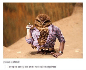 Oh…omg-humor.tumblr.com: yukine-relatable:  i googled sassy bird and i was not disappointed Oh…omg-humor.tumblr.com