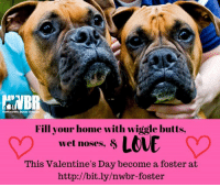 Journey, Memes, and Valentine's Day: YWBR  Northwest Boxer Resctie  Fill your home with wiggle butts,  wet noses, 8  This Valentine's Day become a foster at  http://bit.ly/nwbr-foster Will you become a boxer's Valentine this year?!?! NWBR is in the need of amazing people to help a boxer on their journey to finding a forever home by opening up their homes and fostering. Trust us, boxer kisses and cuddles are way better than a box of chocolate! Apply to become a foster today! http://bit.ly/nwbr-foster
