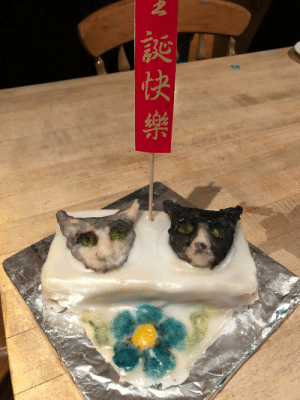 UK Grandad made a Christmas cake of our cats in Singapore for our trip home: z,额快樂 UK Grandad made a Christmas cake of our cats in Singapore for our trip home