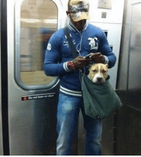 Dank, 🤖, and Pit Bull: Z Donotloan on door  nay The New York subway system bans canines unless they can fit in a small bag, so this guy trained his pit-bull to calmly sit in his small bag.