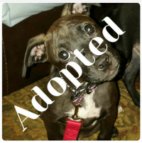 ZA Another Puppy Has Been #Adopted! #Congrats and #Happytails to