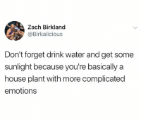 Instagram, House, and Water: Zach Birkland  @Birkalicious  Don't forget drink water and get some  sunlight because you're basically a  house plant with more complicated  emotions @Humor is the funniest page on instagram😂