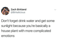 House, Water, and Sunlight: Zach Birkland  @Birkalicious  Don't forget drink water and get some  sunlight because you're basically a  house plant with more complicated  emotions