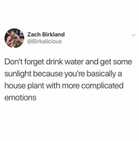 Memes, Twitter, and House: Zach Birkland  @Birkalicious  Don't forget drink water and get some  sunlight because you're basically a  house plant with more complicated  emotions don't forget!!!!! (@birkalicious on Twitter)
