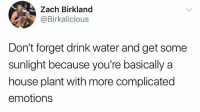 More Complicated: Zach Birkland  @Birkalicious  Don't forget drink water and get some  sunlight because you're basically a  house plant with more complicated  emotions