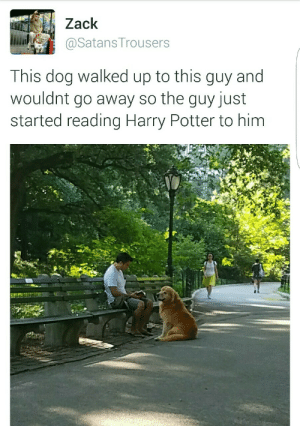 satanstrousers:  I experienced magic in Central Park today : Zack  і.iiaily @SatansTrousers  This dog walked up to this guy and  wouldnt go away so the guy just  started reading Harry Potter to him satanstrousers:  I experienced magic in Central Park today