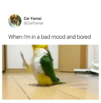 Bad, Bored, and Memes: Zar Famai  @ZarFamai  When i'm in a bad mood and bored Most random video you'll see today 😂😂 turn up the sound!!! ‼️
