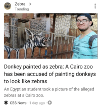 "Donkey, News, and Tumblr: Zebra >  Trending  Donkey painted as zebra: A Cairo zoo  has been accused of painting donkeys  to look like zebras  An Egyptian student took a picture of the alleged  zebras at a Cairo zoo  O CBS News 1 day ago <p><a href=""http://memehumor.net/post/176415389698/tight-budget-i-see"" class=""tumblr_blog"">memehumor</a>:</p>  <blockquote><p>Tight budget, I see.</p></blockquote>"