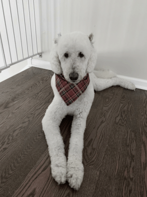 Zoey is all dolled up, single and ready to mingle for all those holiday parties.: Zoey is all dolled up, single and ready to mingle for all those holiday parties.