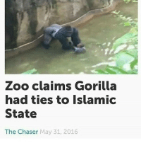 😂😂😂😂: Zoo claims Gorilla  had ties to Islamic  State  The Chaser May 31, 2016 😂😂😂😂