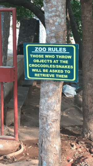 Zoo, Who, and Will: ZOO RULES  THOSE WHO THROW  OBJECTS AT THE  CROCODILESISNAKES  WILL BE ASKED TO  RETRIEVE THEM #AnimalRights