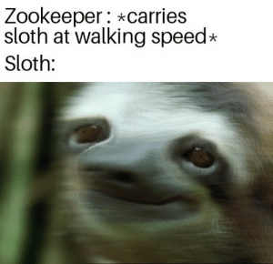 Slow down there, buddy: Zookeeper: *carries  sloth at walking speed  Sloth: Slow down there, buddy